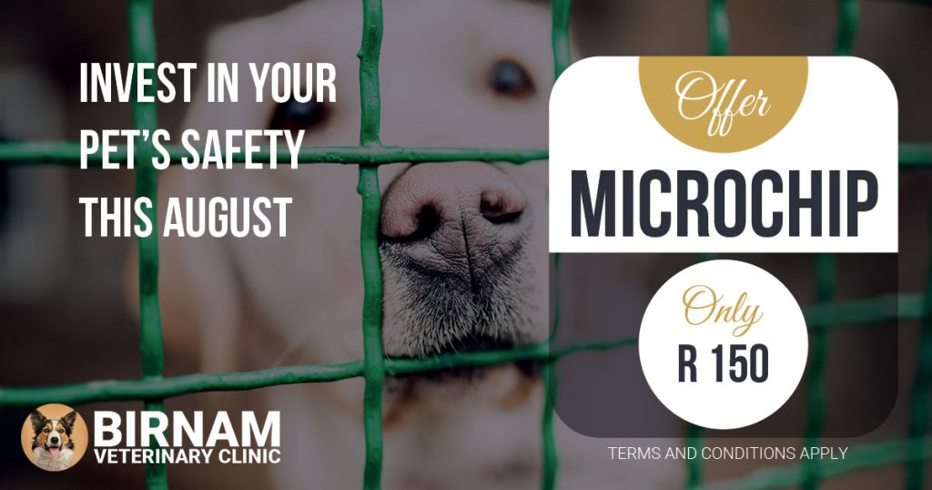 INVEST IN YOUR PET'S SAFETY THIS AUGUST