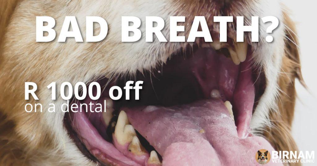 Dental promotion September 2020